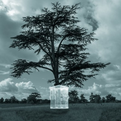 The Adam tree house